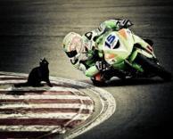 חתולה שחורה-צריך לירוק!