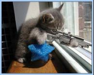 חתול מופרע
