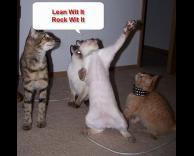 מצחיק במיוחד - חתולים