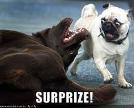 הפתעה !