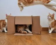 חתול מעופף