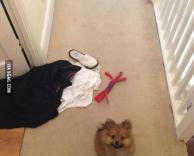 הכלב בחר לי מה ללבוש