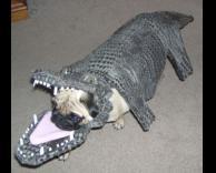 כלב מחופש לתנין