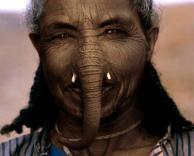 אשת הפיל