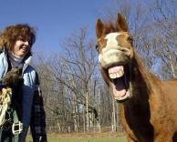 סוס צוחק