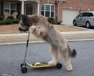 גם כלבים רוכבים