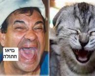 מיאו חתולה