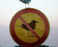 ציפור עבריינית