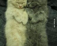 כיף לישון יחד
