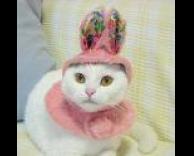 חתולה מחופשת למלכה