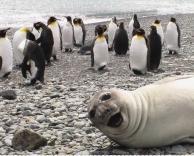כלב ים חמוד
