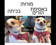 אין הבדל