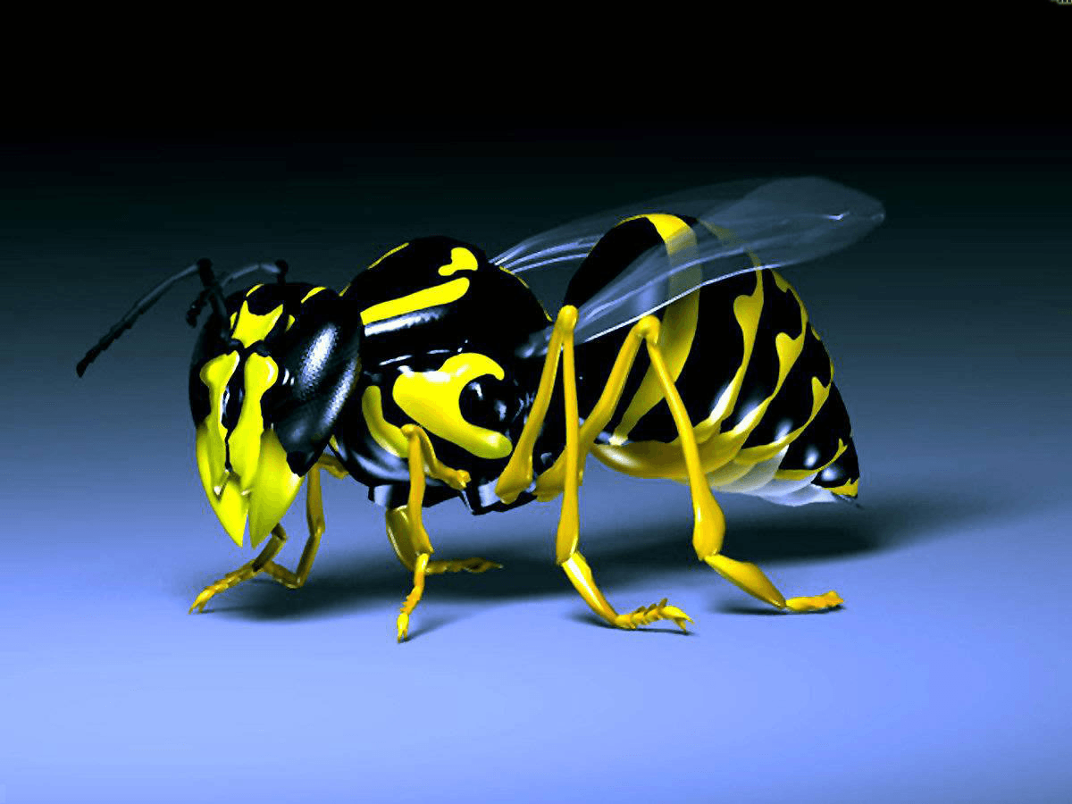 דבורה צהובה