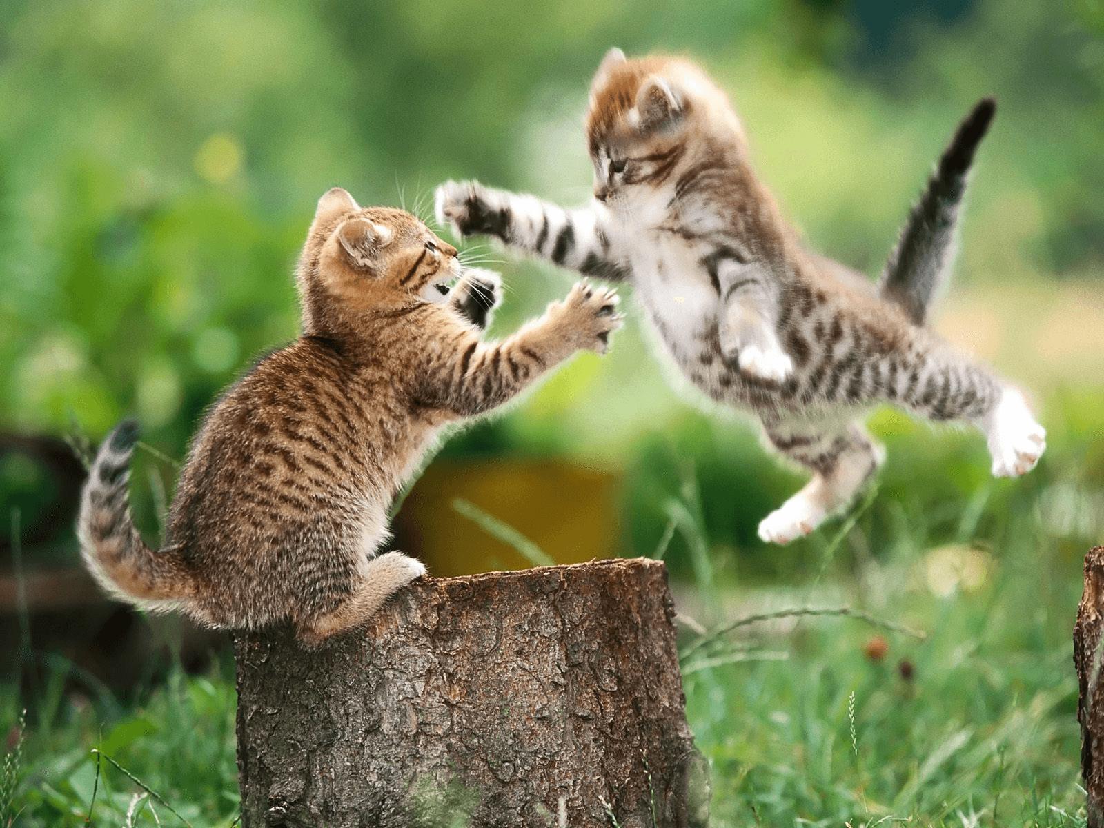 חתולים קטנים רבים