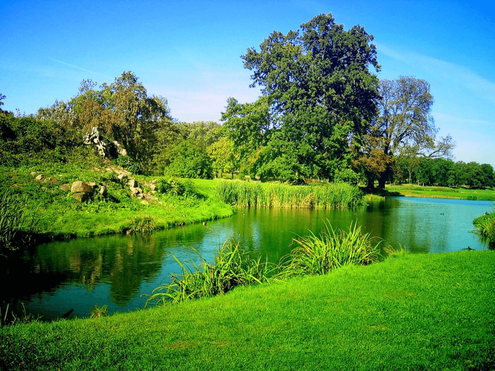 ירוק בעיניים