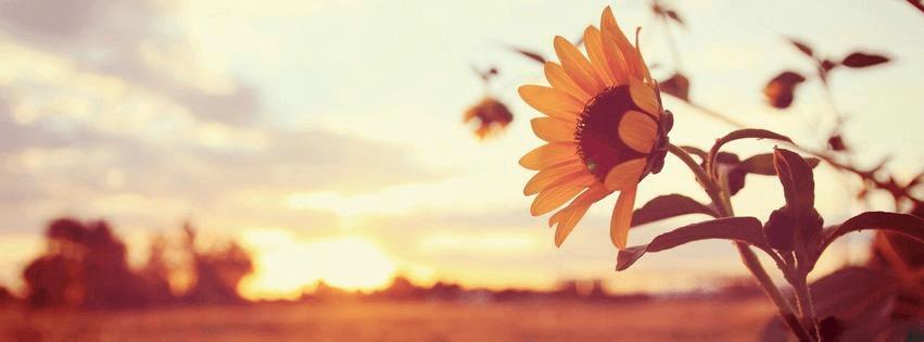 פרחים בזריחה